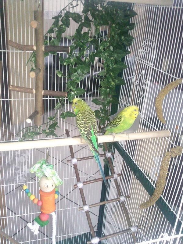 ma nouvelle cage Photo021