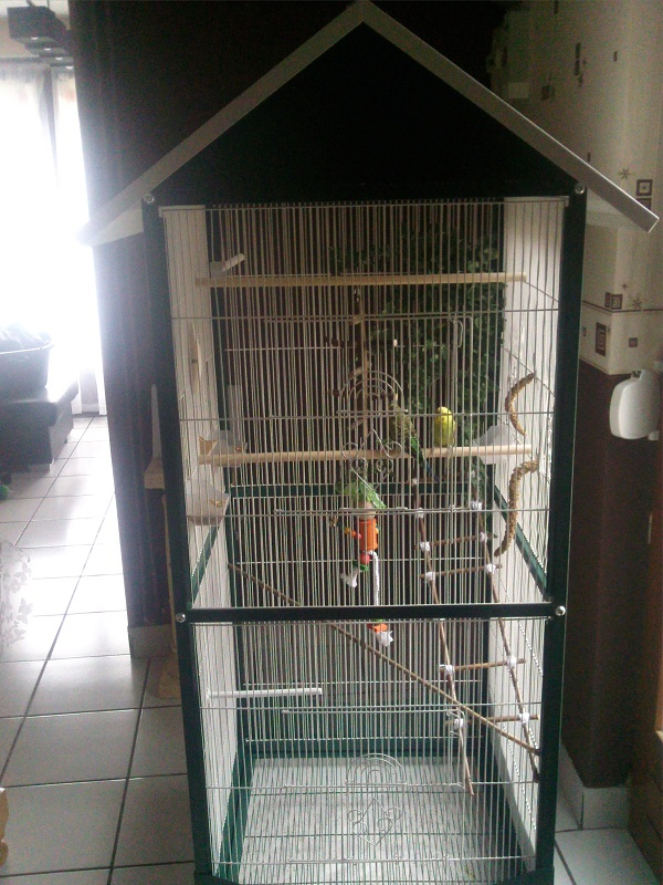 ma nouvelle cage Photo022