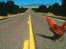 Pourquoi le Poulet traverse la route ? - Page 6 23574310