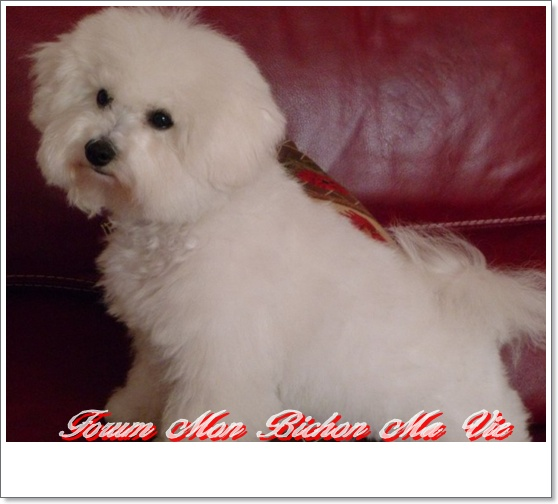 Album photos des bichons Flora10