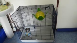 Vend cage Freddy Max P1020912