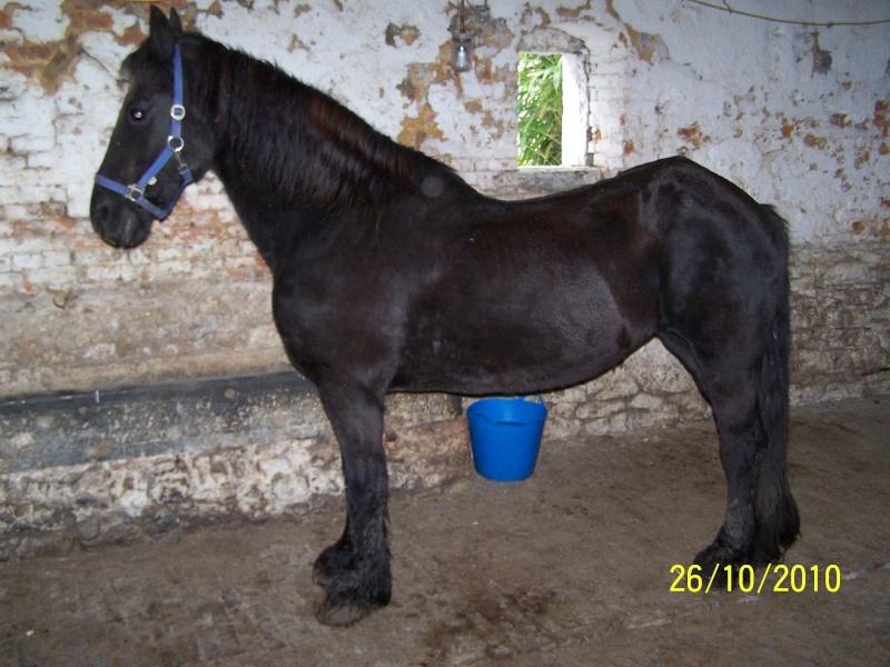 Fête équestre à Bernissart le 23 octobre: le défilé des chevaux à adopter 100_8710
