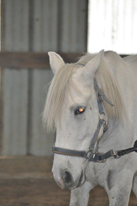Fête équestre à Bernissart le 23 octobre: le défilé des chevaux à adopter 33592_10