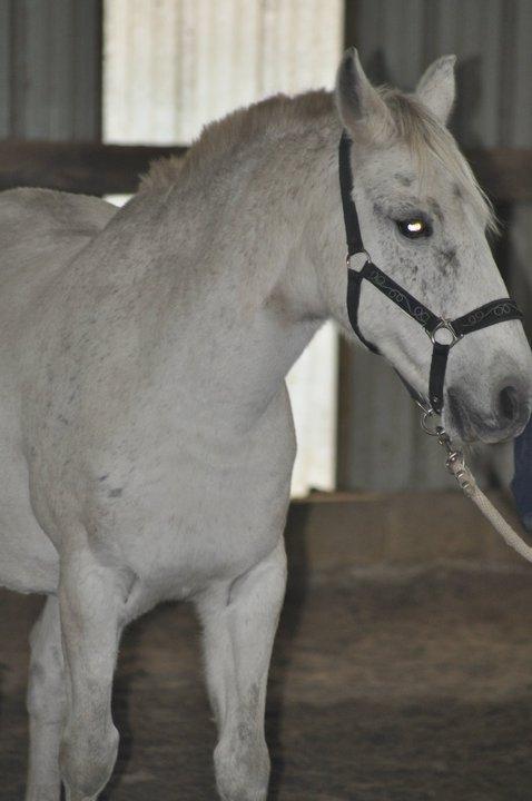 Fête équestre à Bernissart le 23 octobre: le défilé des chevaux à adopter 34437_10