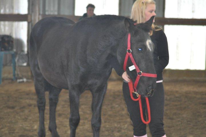 Fête équestre à Bernissart le 23 octobre: le défilé des chevaux à adopter 67278_10