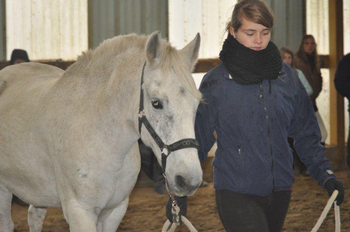 Fête équestre à Bernissart le 23 octobre: le défilé des chevaux à adopter 68713_10