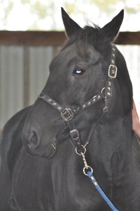 Fête équestre à Bernissart le 23 octobre: le défilé des chevaux à adopter 68882_10