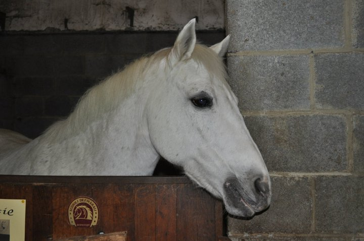 Fête équestre à Bernissart le 23 octobre: le défilé des chevaux à adopter 69306_10