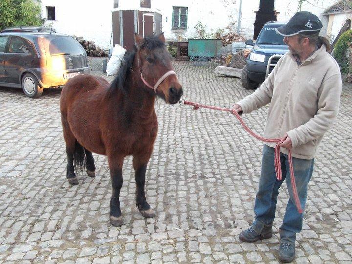 Fête équestre à Bernissart le 23 octobre: le défilé des chevaux à adopter 73026_10