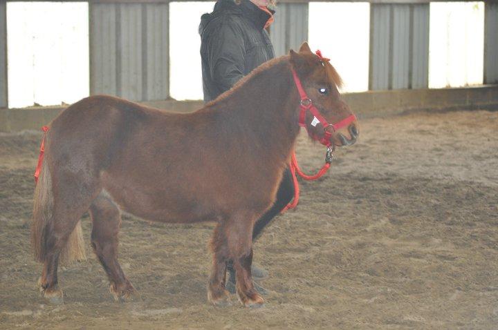 Fête équestre à Bernissart le 23 octobre: le défilé des chevaux à adopter 73157_10