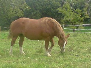 Fête équestre à Bernissart le 23 octobre: le défilé des chevaux à adopter C_est_10