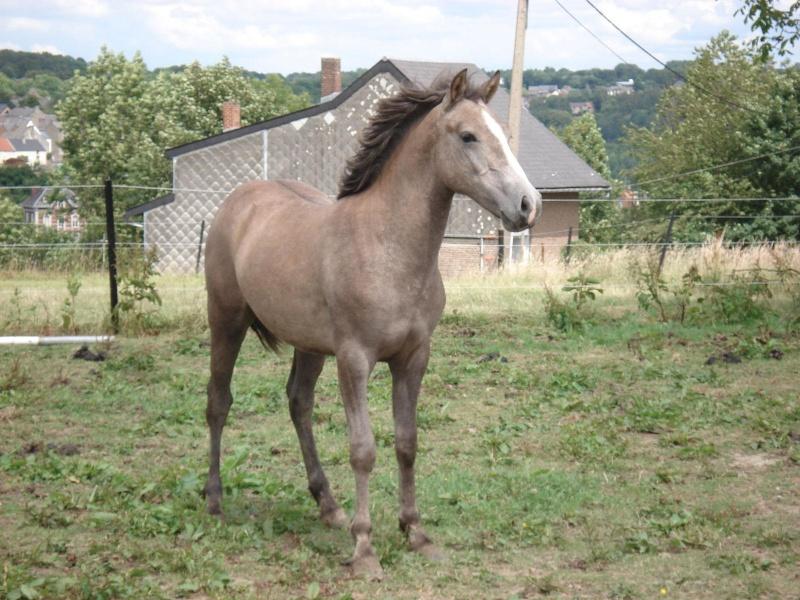ASTER, poulain (croisé haflinger et poney d'1m40), adopté Dsc07810