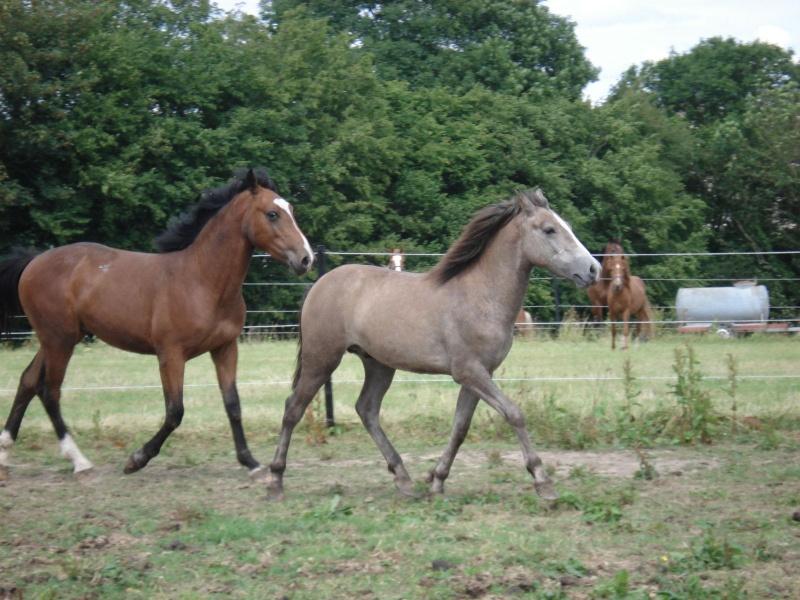 ASTER, poulain (croisé haflinger et poney d'1m40), adopté Dsc07910
