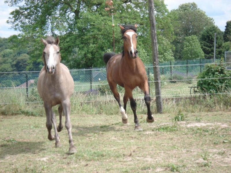 ASTER, poulain (croisé haflinger et poney d'1m40), adopté Dsc07914