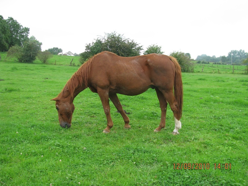 Fête équestre à Bernissart le 23 octobre: le défilé des chevaux à adopter Img_3219