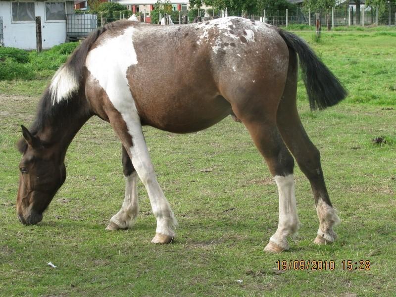 Fête équestre à Bernissart le 23 octobre: le défilé des chevaux à adopter Img_3220