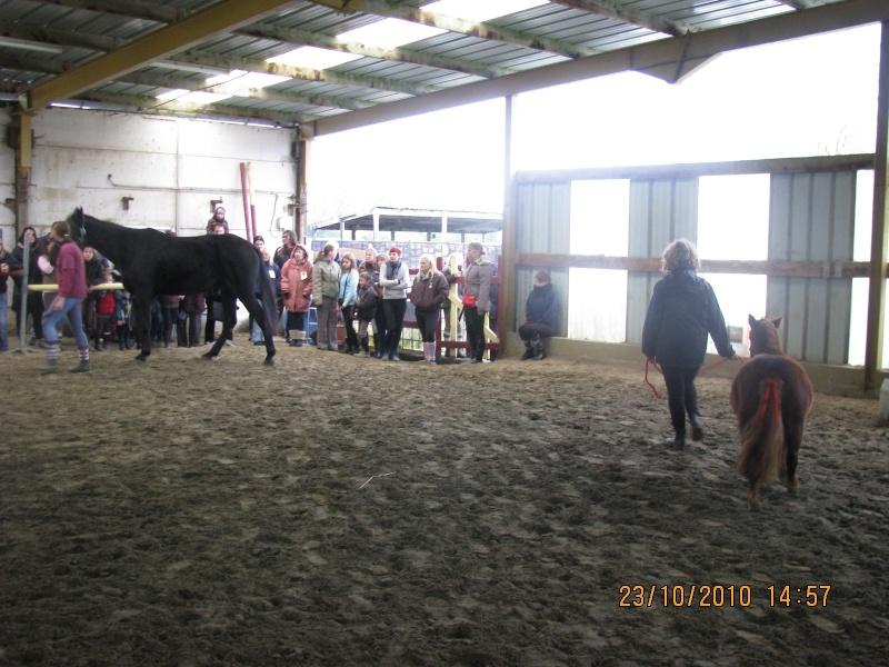 Fête équestre à Bernissart le 23 octobre: le défilé des chevaux à adopter Img_3319