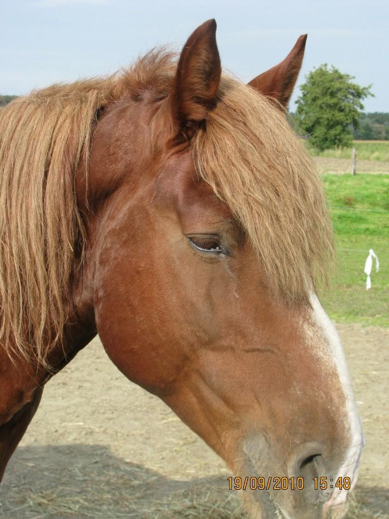 Fête équestre à Bernissart le 23 octobre: le défilé des chevaux à adopter Img_3320