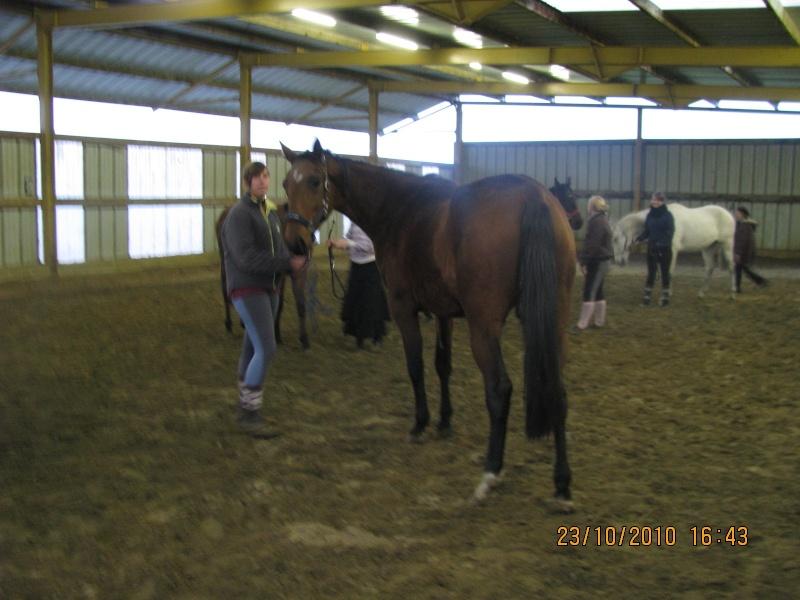 Fête équestre à Bernissart le 23 octobre: le défilé des chevaux à adopter Img_3410