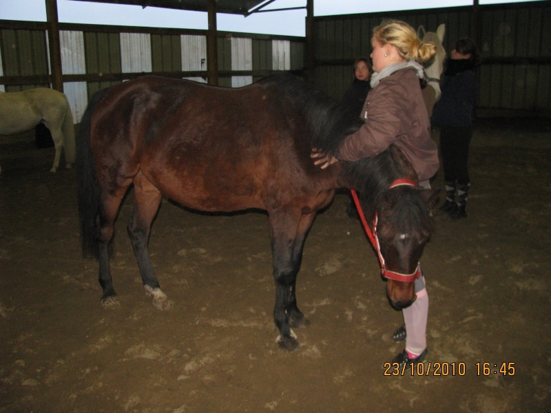 Fête équestre à Bernissart le 23 octobre: le défilé des chevaux à adopter Img_3413
