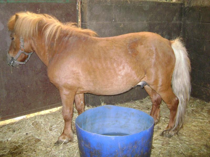 Fête équestre à Bernissart le 23 octobre: le défilé des chevaux à adopter Marc_012