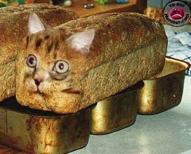 Nos pains du jour Les_ch10