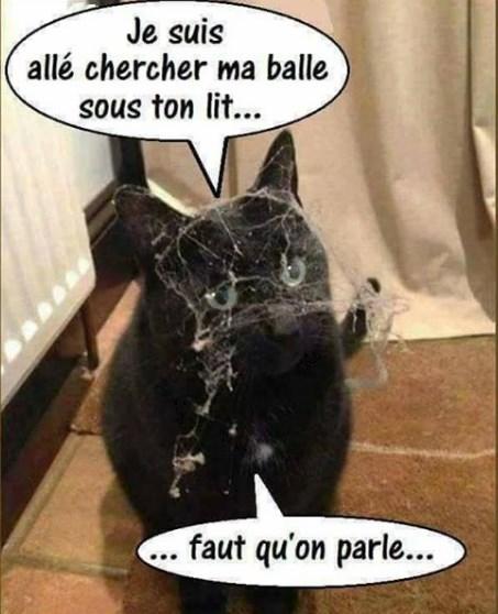 Chats alors !!! Chat-d10