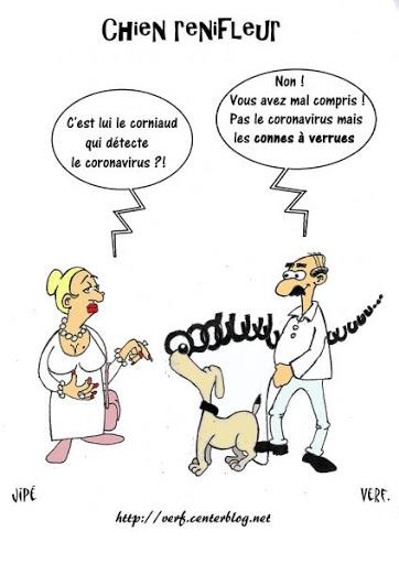Covid-19: des chiens renifleurs dès cet été en France, espère le ministère de la Santé Unname15