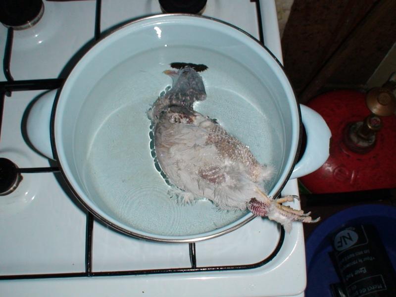 Tuer et préparer une volaille Dsc02413