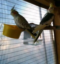 plumes de la queue Img_0211