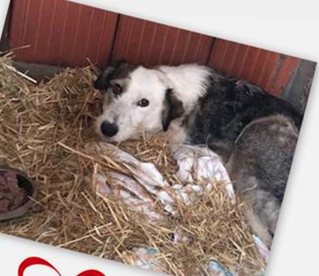 LORENA, F-X, née ?, 21KG (ORASTIE/Timisoara) A besoin d'urgence d'un traitement Captur35