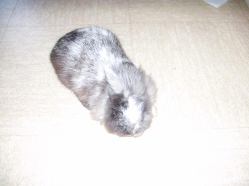 SOS pour un lapinou trouvé aujourd'hui Imag0015
