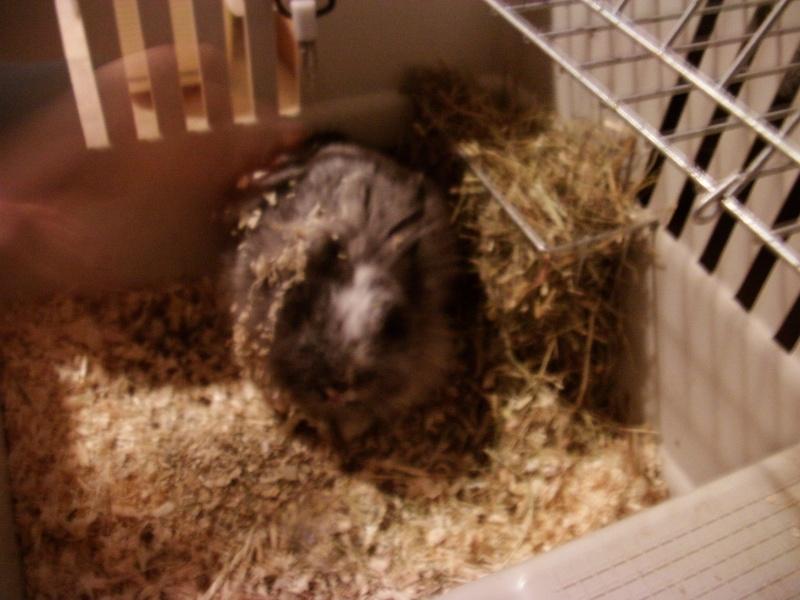 SOS pour un lapinou trouvé aujourd'hui Imag0017