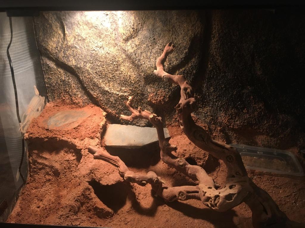 Chauffage terrarium pour gecko léopard  7c1c4910