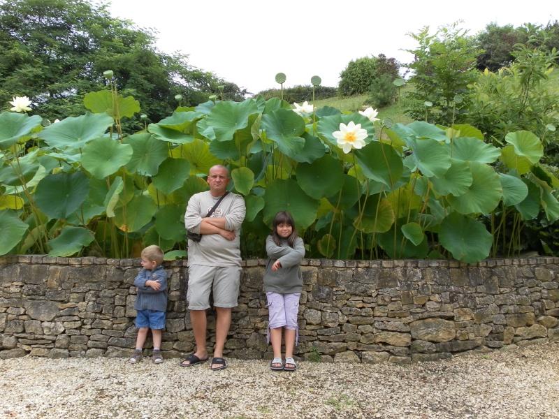 les graines de lotus de kiko - Page 3 Lotus10