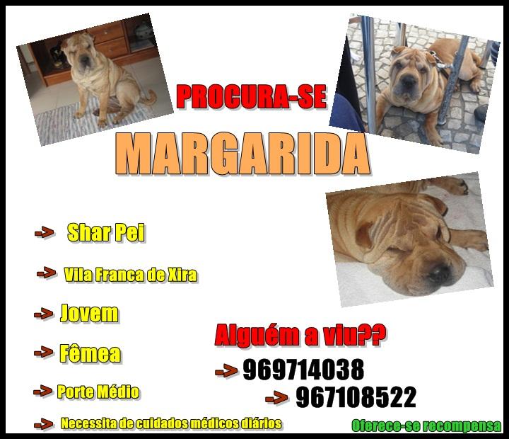 [Perdida] Margarida, Shar Pei, Vila Franca de Xira Jo11