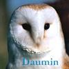 Audreanne Roux Daumin10