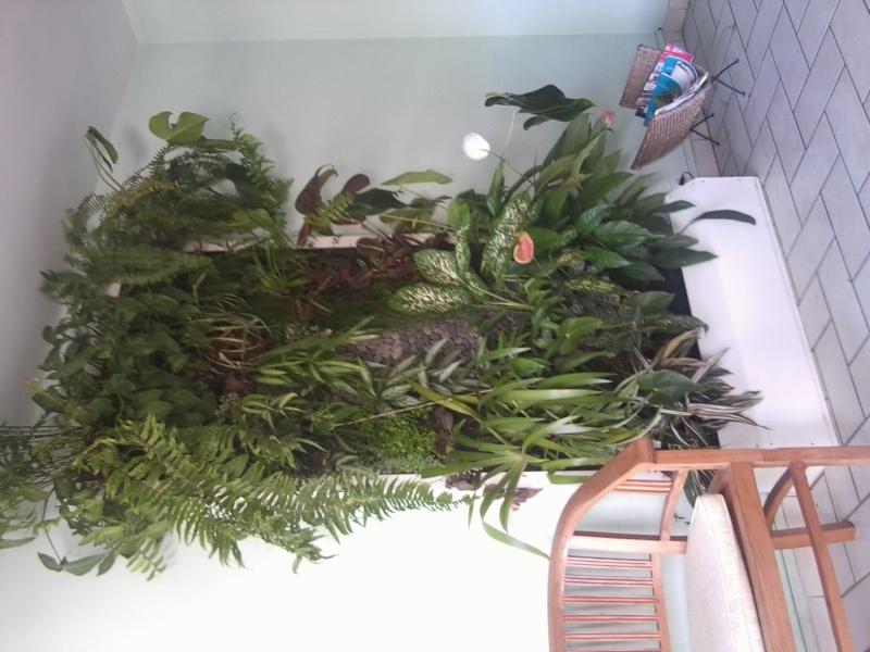 module vegetal Photo041