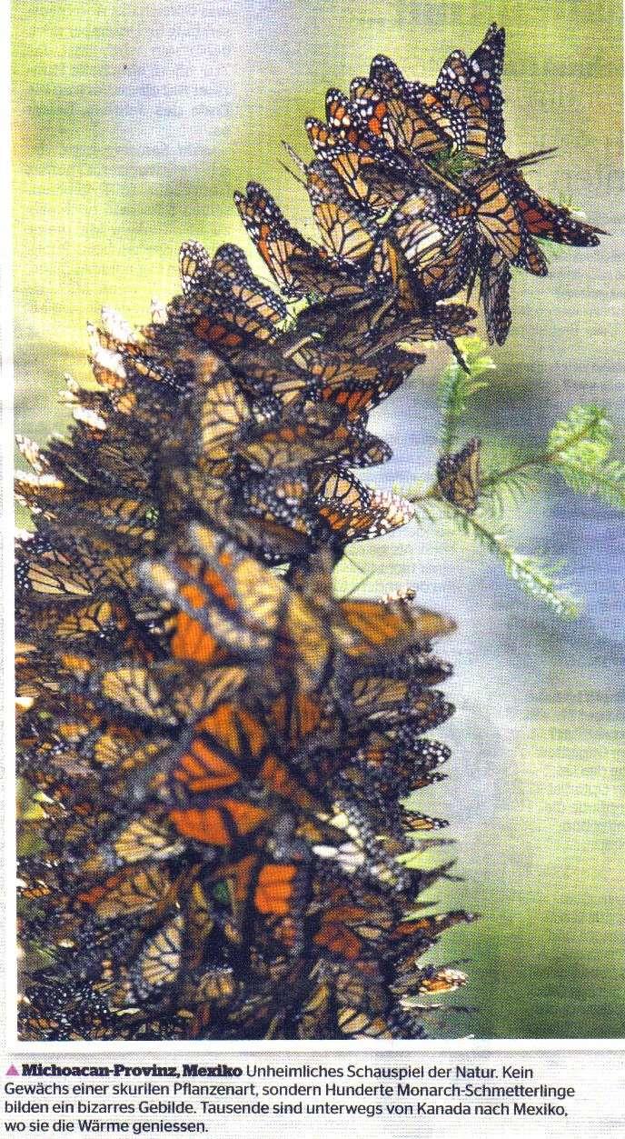 Danke Ursula für die Schmetterlinge Schmet10