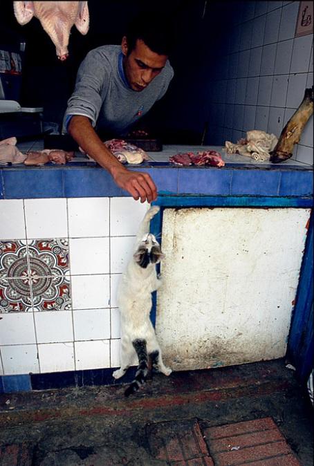 La vie des chats en hospitalité à Essaouira.حياة ألقطط في ضيافة ألصويرة Cat-es10
