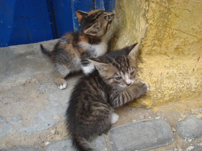 La vie des chats en hospitalité à Essaouira.حياة ألقطط في ضيافة ألصويرة Dsc08032