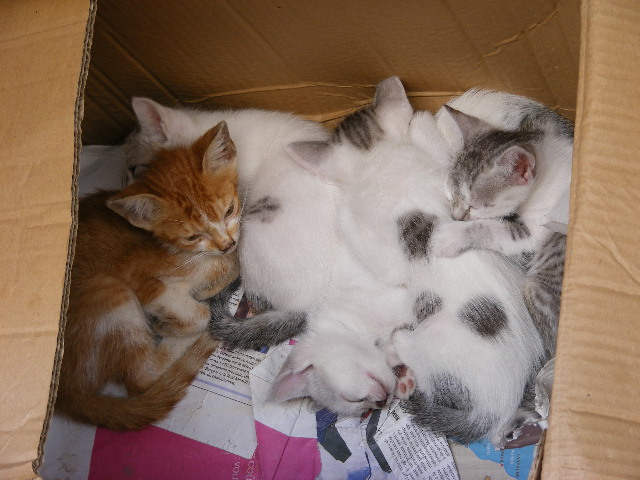 La vie des chats en hospitalité à Essaouira.حياة ألقطط في ضيافة ألصويرة Dscf3710
