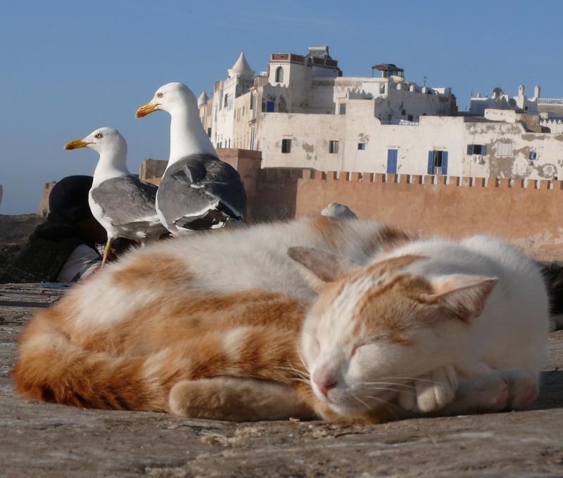 La vie des chats en hospitalité à Essaouira.حياة ألقطط في ضيافة ألصويرة P1010313