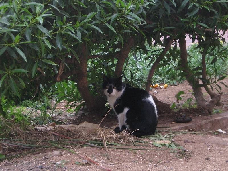 La vie des chats en hospitalité à Essaouira.حياة ألقطط في ضيافة ألصويرة Photo_13