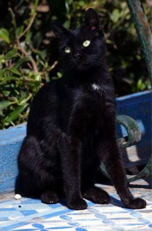 La vie des chats en hospitalité à Essaouira.حياة ألقطط في ضيافة ألصويرة Thumb_12