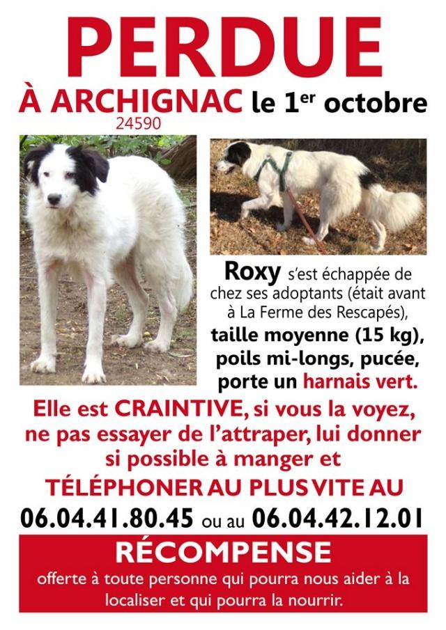 Roxy, femelle disparue dpt 24,pucée Roxy10