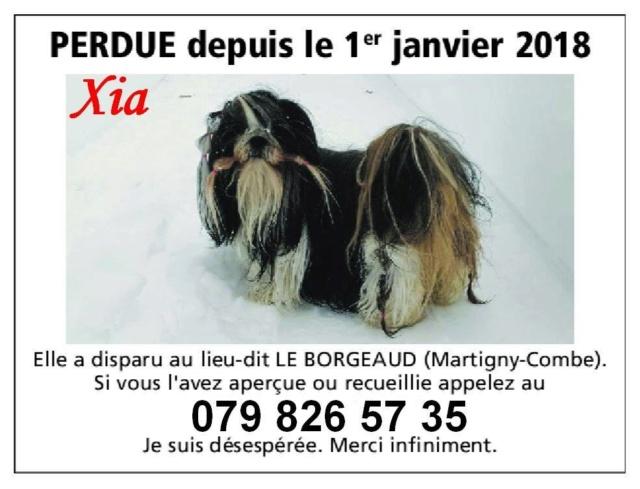 Xia, Femelle bringée blanche, disparue en Suisse, identifiée Xia10