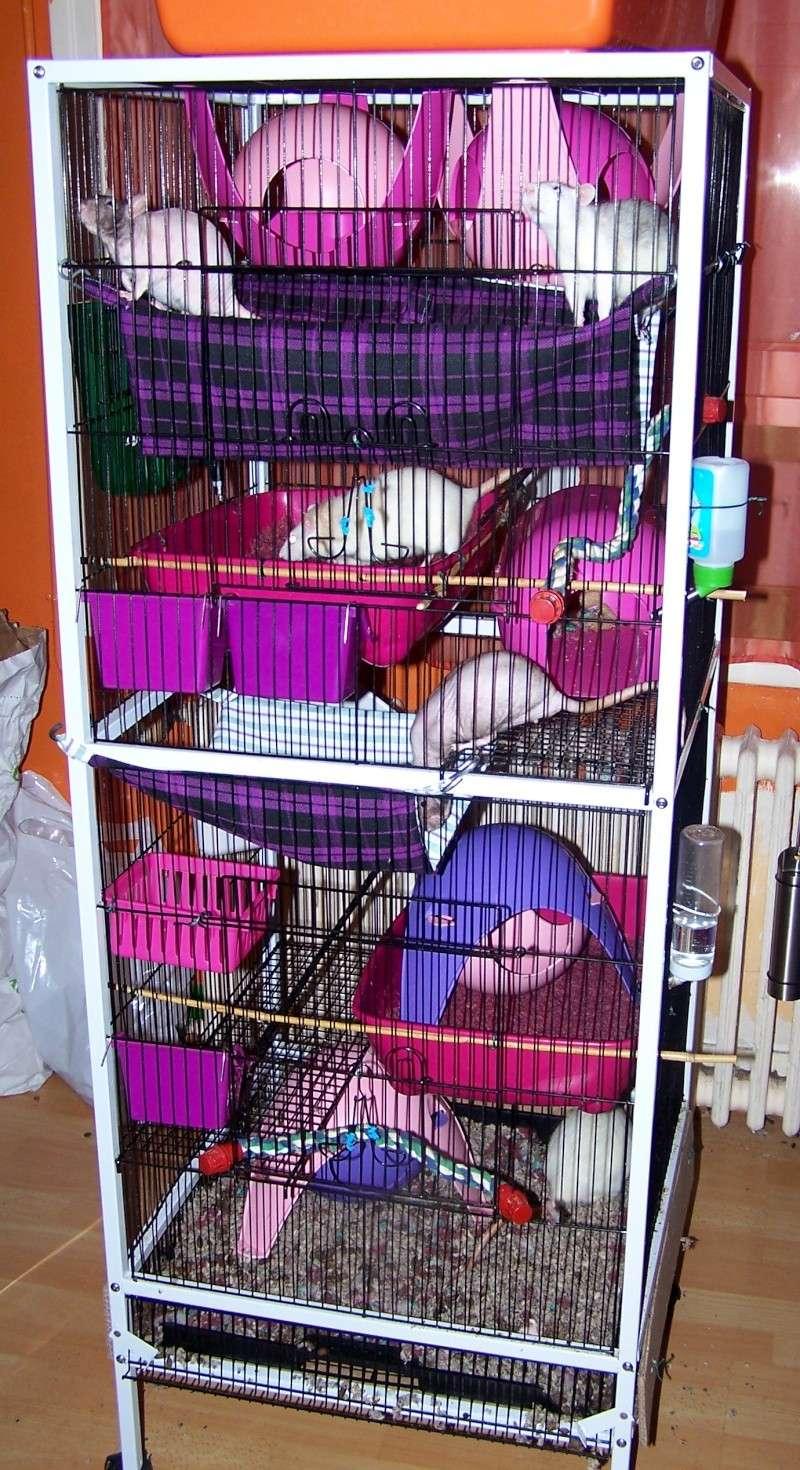 Photos de vos cages - Page 3 Cage_f23