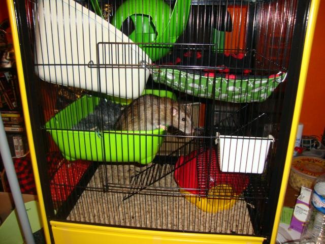 Photos de vos cages - Page 5 Dsc02214