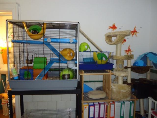 Photos de vos cages - Page 3 Dsc04510